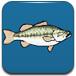 小鲈鱼吃小鱼-敏捷小游戏